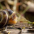 The Timid Snail by Gareth Pugh