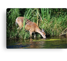 Thirsty Canvas Print