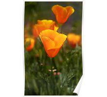 California Poppy Poster