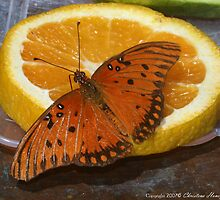 Orange On Orange by Christena Honeyman