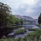 A few daffodils Rydal Water Lake District England 198405200045 by Fred Mitchell