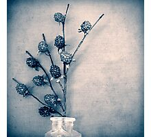 Sweet Blue Photographic Print