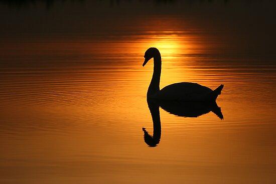 On Golden Pond  by geoff curtis