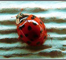 Lady Bug in HD by Dani LaBerge