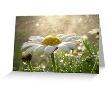 Daisies in the Mist Greeting Card