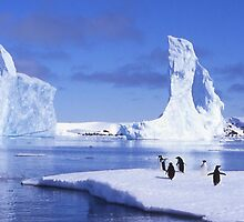 Penguins on Ice by Robyn Maynard