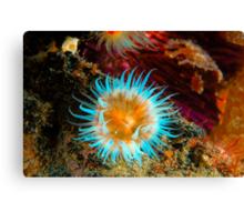 Vibrant Anemone Canvas Print