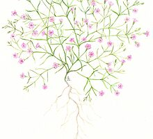 Baby's Breath - Gypsophila muralis by Sue Abonyi