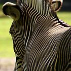 Z like Zebra  by MarcVDS