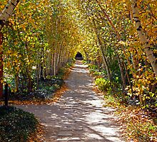 Birch Allee Vista by Jeff  Burns