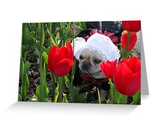 Lily in the Tulips Greeting Card