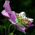 JWSP Flower by Rick Lawler