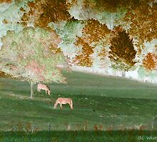 Horses Grazing by Beckylee