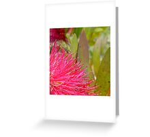 Pink Bottlebrush Greeting Card