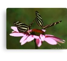 Zebra Longwing Butterfly Canvas Print