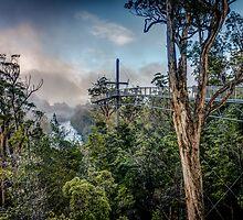 Tahune Air Walk, Tasmania by Russell Charters
