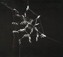 0015 - Brush and Ink - Spiders by wetdryvac