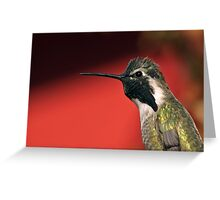 Hummer Portrait with Red Background Greeting Card