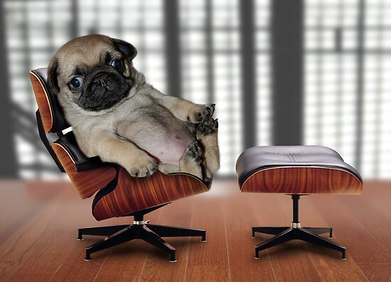 Pug Art and Design: Top Dog by Phil Rowe