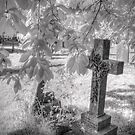 Infrared Graveyard by Ann Garrett