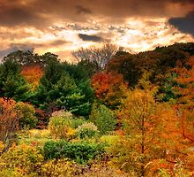 Autumn Tree's at Dusk by Mike  Savad