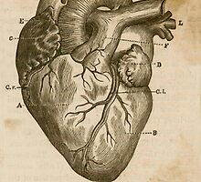 Anatomy of the Heart by BritishYank