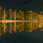 Reflected Pines by Jeanie