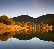 Buttermere Pines by Jeanie