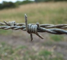 Barb Wire by Sarah Mosbey