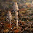 An autumn find !  by Johanna26
