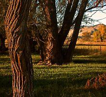Natures Composition by John  De Bord Photography