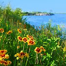 Wild flowers on seashore by Elena Elisseeva