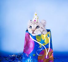 Birthday Kitten by idapix