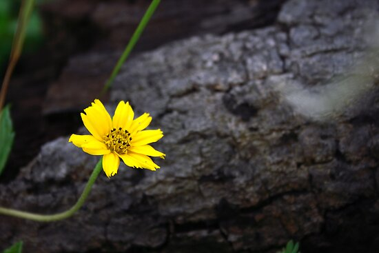 Little beauty by BengLim