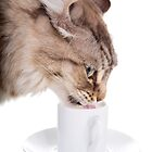 Cat Drinking From Cup by idapix