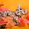 Fall Kitten by idapix