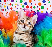 Party Bengal Kitten by idapix