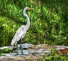 Egret by Mike  Savad