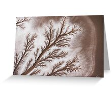 Feathered Riverbed Greeting Card