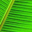 Banana Leaf by Robyn Carter