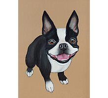 Boston Terrier Photographic Print