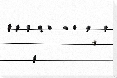 Birds on wire by Elena Elisseeva