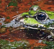 """Chives"" The Star Frog summer in all its forms 2 (c)(h) by Olao-Olavia / Okaio Créations fz 1000 by okaio caillaud olivier"