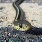 Snake up Close 985 by NiftyGaloot
