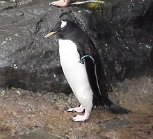 Penguin Stance by EmmaMint