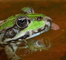 """Chives""  The Star Frog summer in all its forms 9 (c)(h) by Olao-Olavia / Okaio Créations fz 1000 by okaio caillaud olivier"