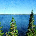 beautiful blue lake, sky and green evergreen tree in Yellowstone National Park. by naturematters