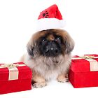 Christmas Pekingese by idapix