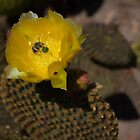 Prickly Pear Cactus and Friends by Dennis Reagan