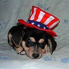 4th of july puppy by artwoman3571
